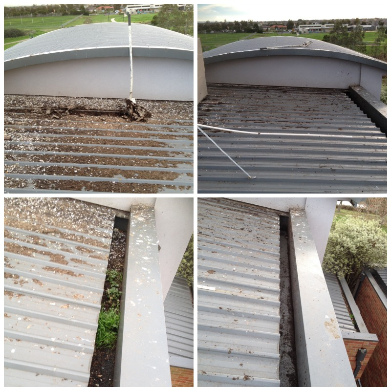 Cleaning gutters across Melbourne