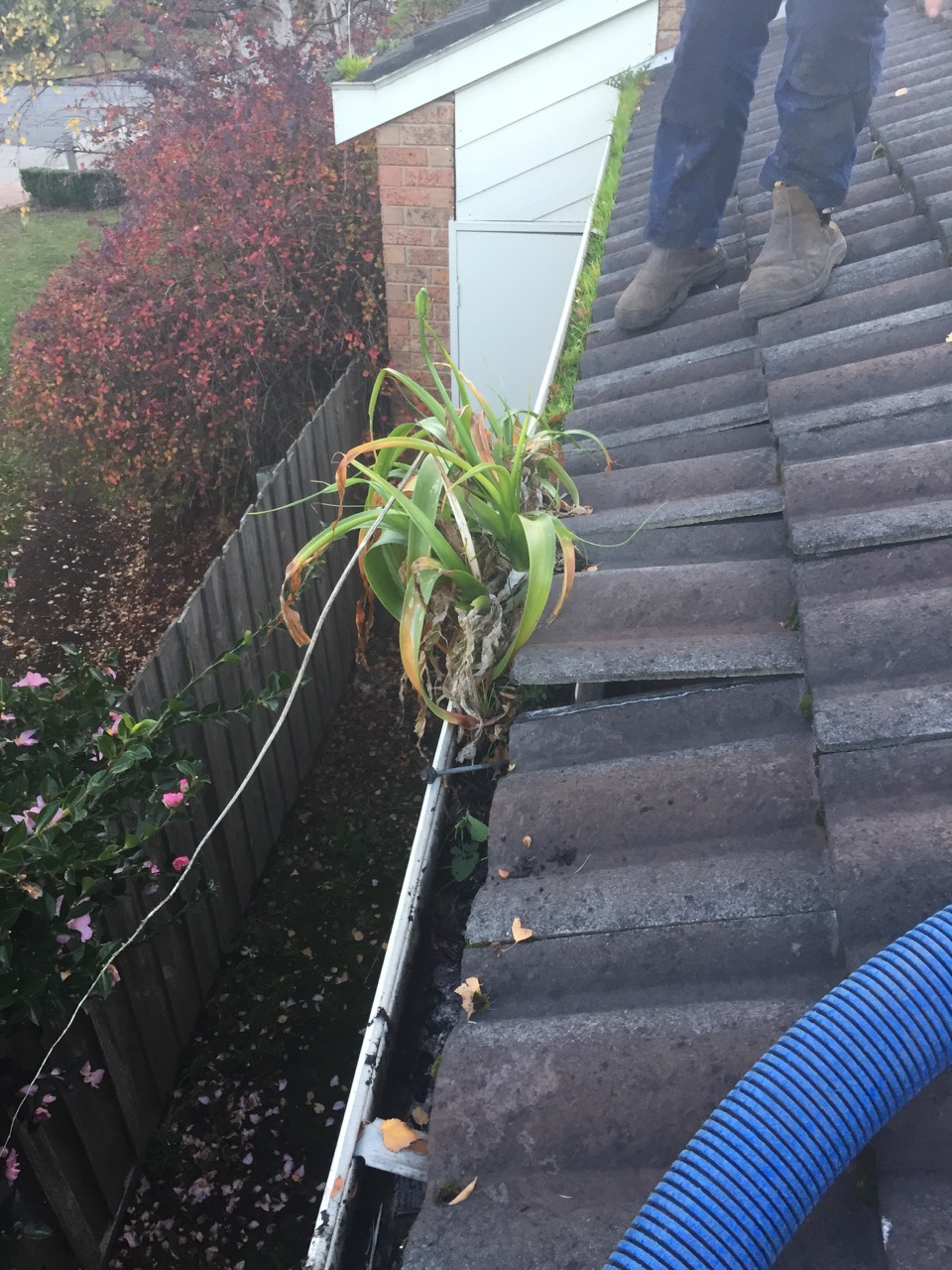 Gutters Clean Growing onions