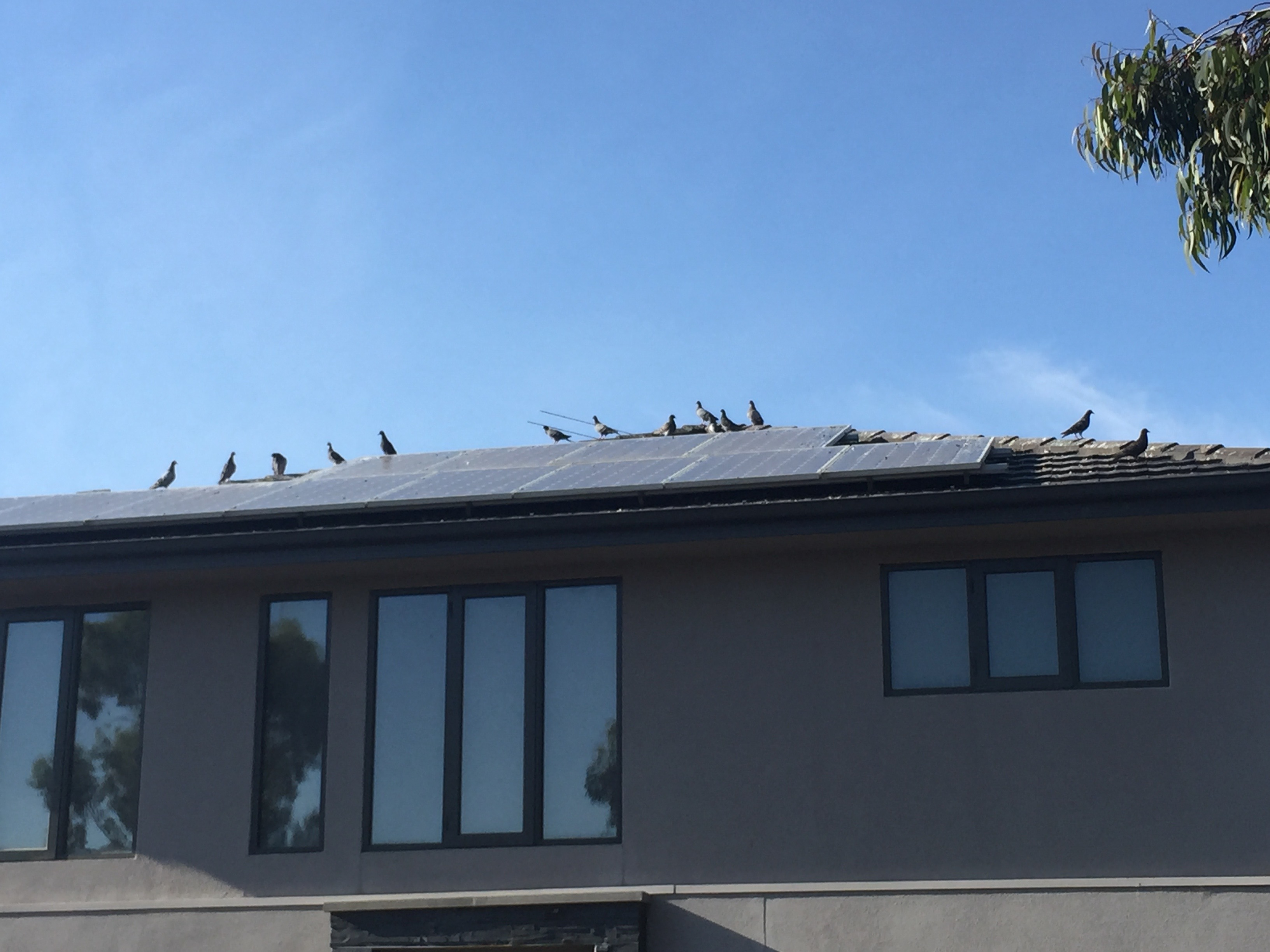 Solar Panel Cleaning Gutter Vacuuming Melbourne Amp Berwick