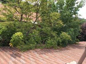 Tree Trimming Gutter Cleaning