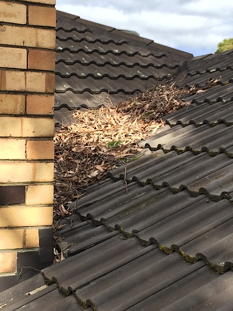 Dust of leaves on roof